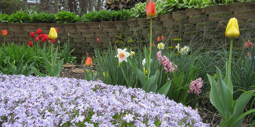 Flowers blooming in Mount Vernon
