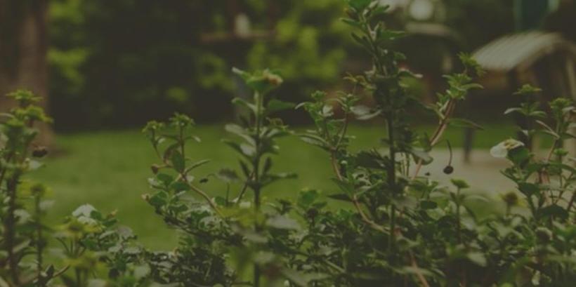 plants flowers in backyard