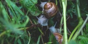 shells in water