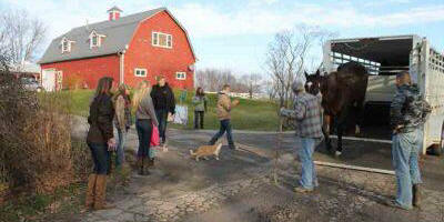photo of unloading a horse from trailer