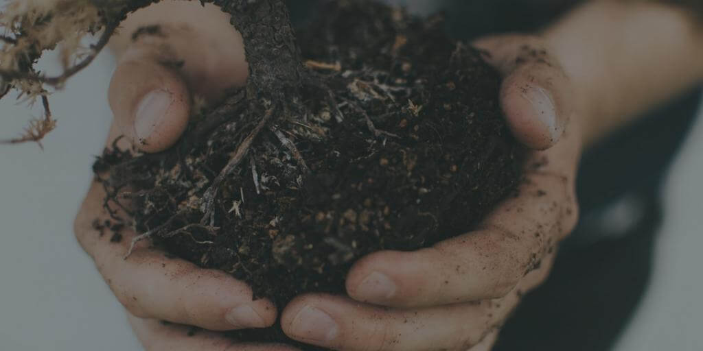hands holding soil and plant while gardening