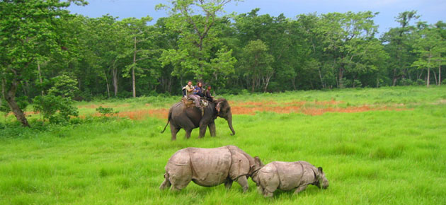Chitwan national park is famous for elephant safari where many wildlife lovers reach there to observe very rare animals like one-horned rhinoceros, bengal tigers.