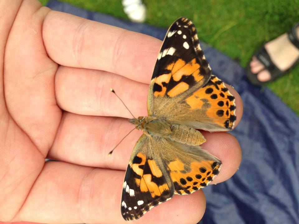 Butterfly magic with Creatures and Critters