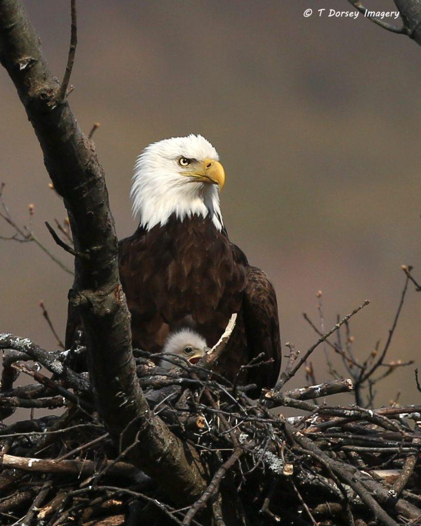 2015 May 3 Eagles 052