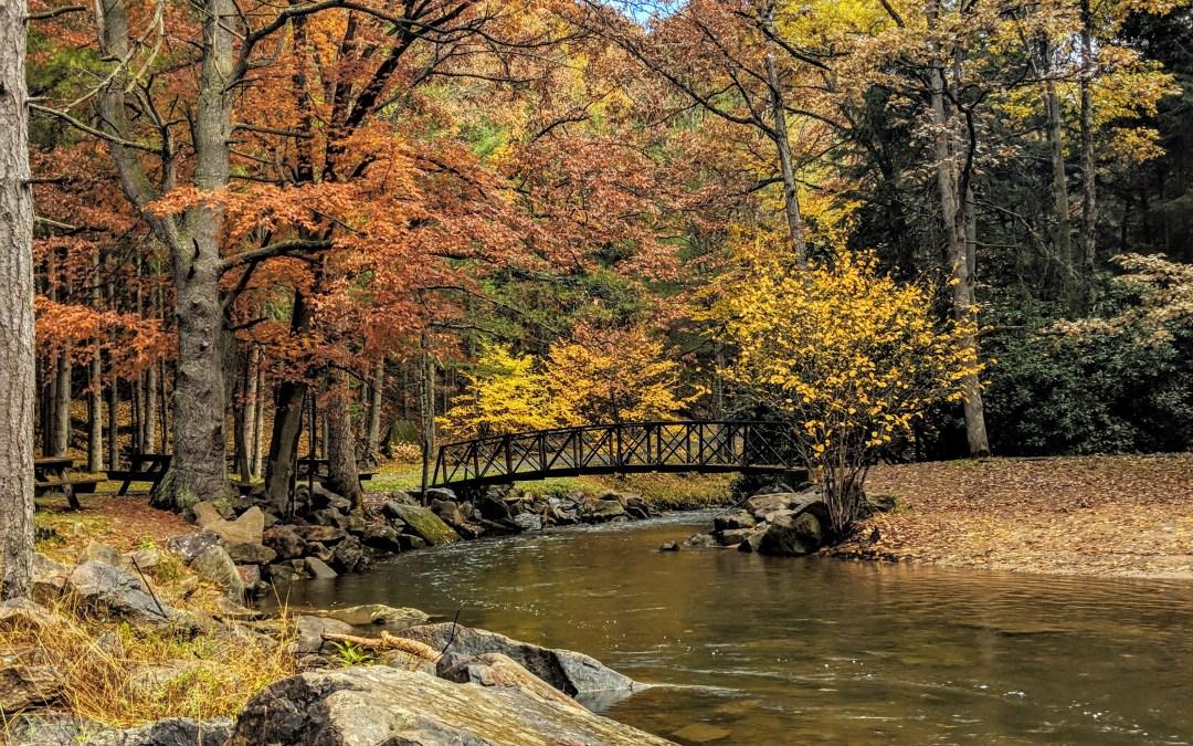 Falls Woods