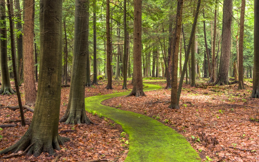 Walk Cook Forest's Emerald Path