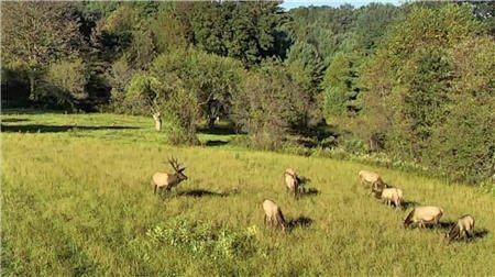 Elk Cam Huge Success
