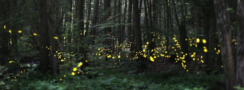 Firefly Season