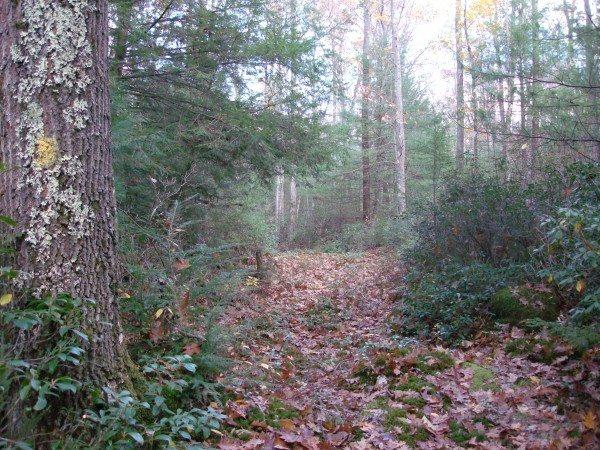 Tobecco Trail