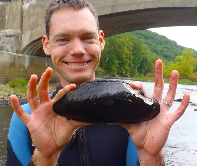 Clarion River Mussel Relocation project