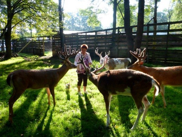 The Deer Lady