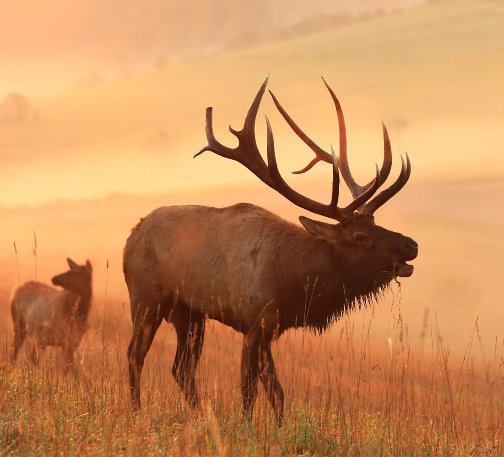 Country Fall Wallpaper Outdoor Adventures Elk Viewing Visiting The Pa Great