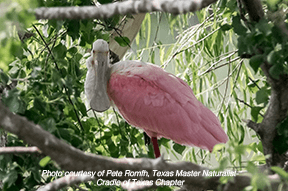 John Hargrove Environmental Complex & Wetlands is ideal for birdwatching in Pearland
