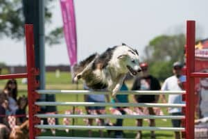 Paws in the Park Annual Event in Pearland