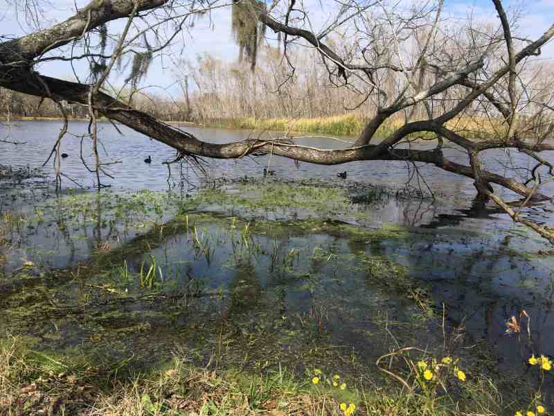 Brazos Bend State Park