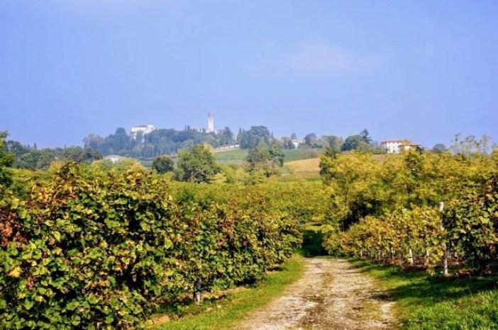 Visit Prosecco Italy Malibran Vineyard