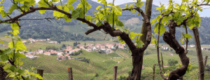 Visit Prosecco Italy View through vines