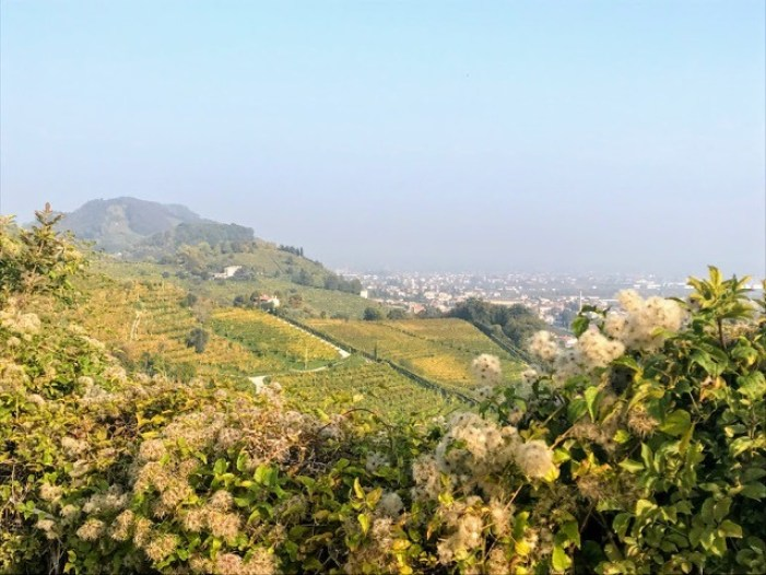 Visit Prosecco Italy Vineyard Marchiori view