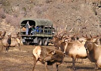Tour truck at the Elk Feeding Station