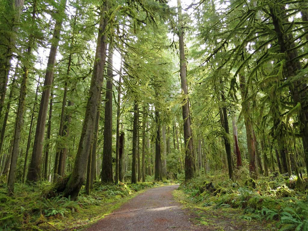 And temperate evergreen forests such as the sclerophyllous eucalyptus forests of. 6v4qhgki14pfym