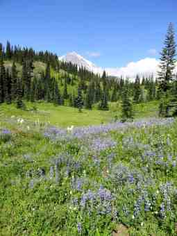 Beautiful wildflower meadows along the trail © Craig Romano