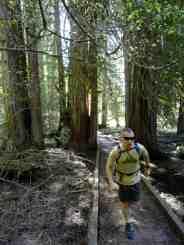 Running through an ancient cedar grove on the Moss Lake Loop © Craig Romano