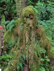 Mongo the Mosssquatch