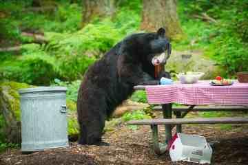 Bear Camp 2017