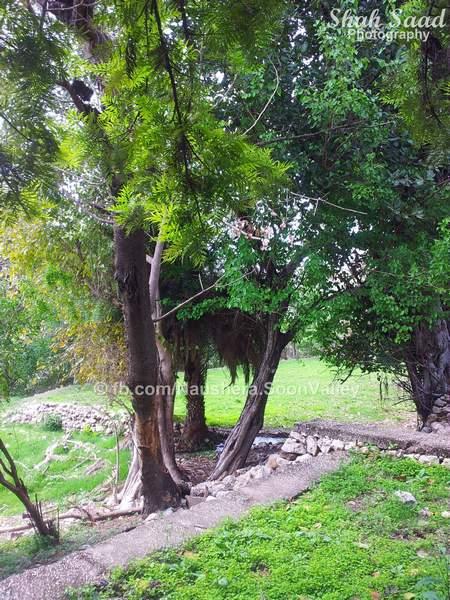 Nurshingh Phowar Soon Valley