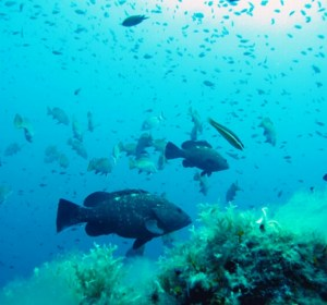 Snorkeling Tour In Olbia And Tavolara