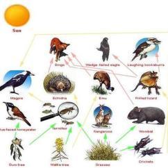 Savanna Animal Food Chain Diagram Goodman Electric Furnace Wiring Web The Savage Of Australian Tropical