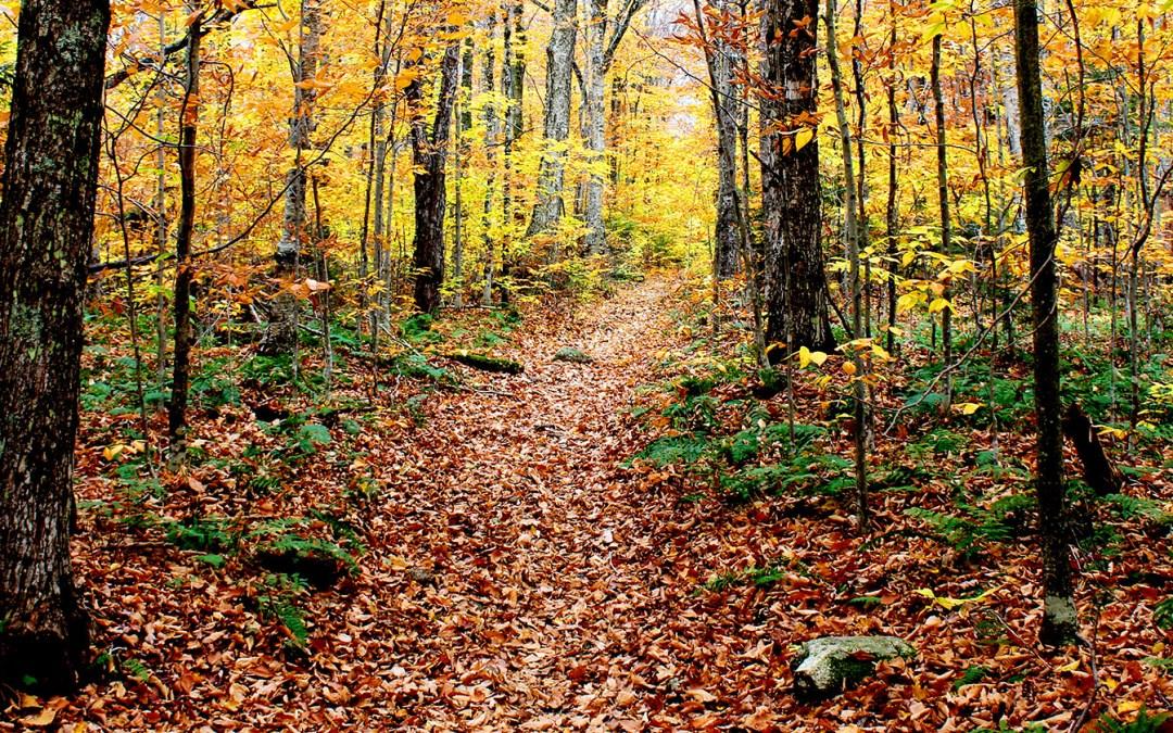 Buffalo Mountain Trail #29