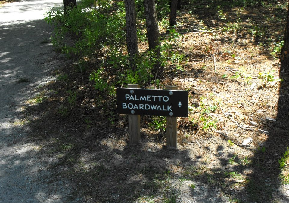 Palmetto Boardwalk Hike