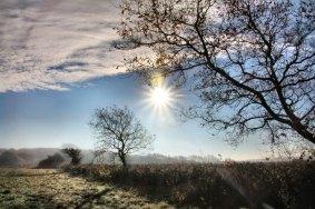 frosty-field