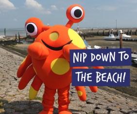 Nipper-nip-to-the-beach