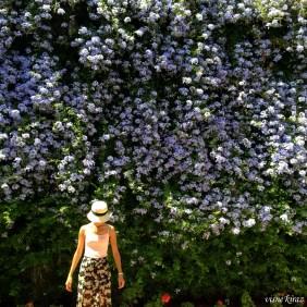 Dikey bahçe - Palacio de Viana