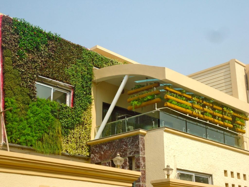 Green Wall 101: A Short Course on Everything You Need To Know