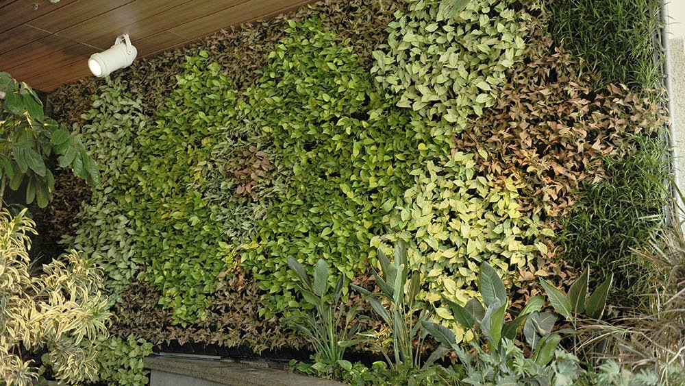 living wall systems supplier australia
