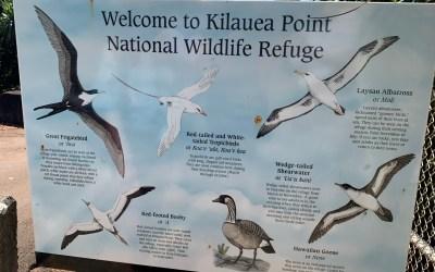 Kilauea Point National Wildlife Refuge – Hidden Gem in Kauai – Tour the World Wednesday – 4