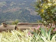 finca and mountains