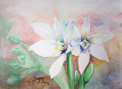"""Finished watercolor painting """"bright eyes"""" of bethlehem star flowers."""