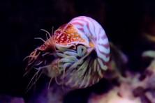 cephalopods07