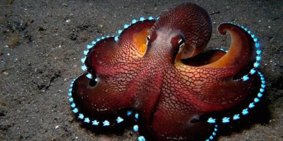 cephalopods_02