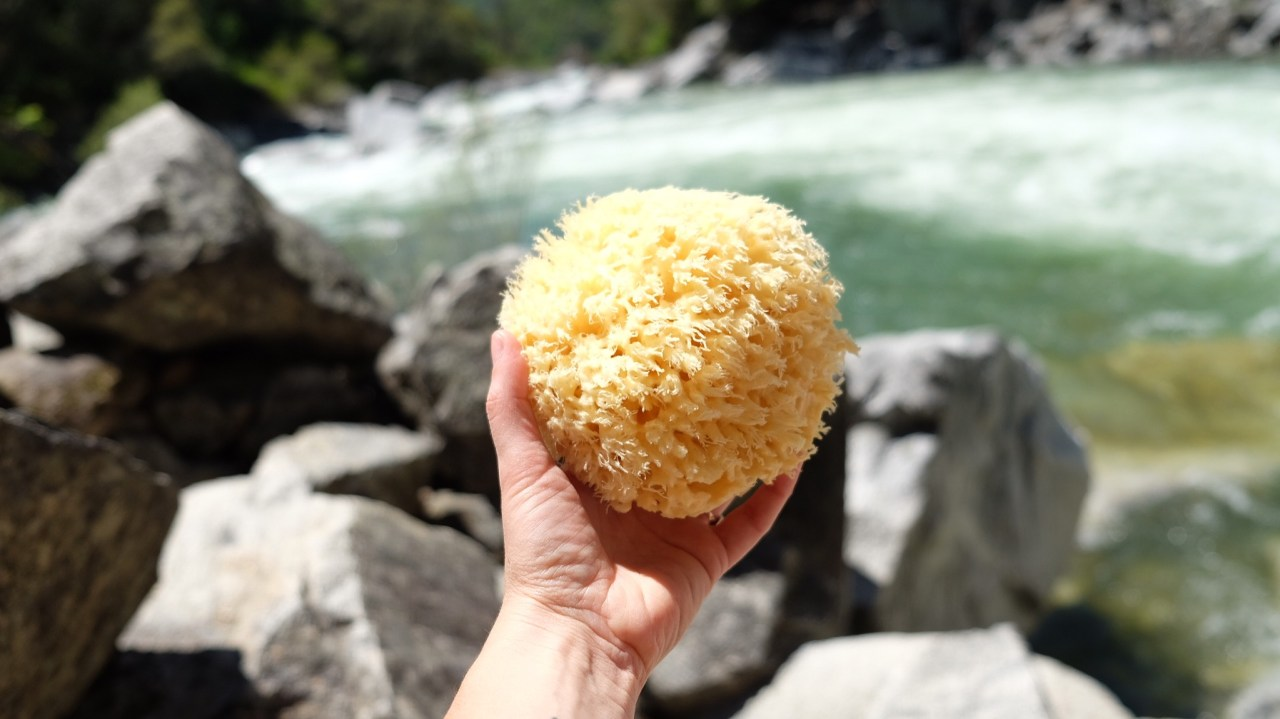 river sponge