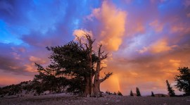 One of the most amazing sunsets I've ever experienced. Shot at the Patriarch Grove in the Ancient Bristlecone Pine Forest on August 22 with rain clouds looming over head, mother nature put on a show. Rain, lightning, double rainbows and golden light.