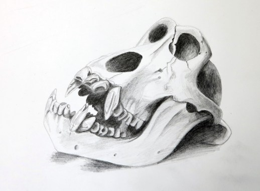 gorilla, pencil 2h, 2b, 4b