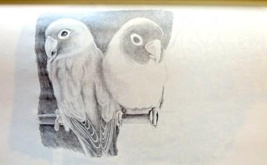 birds, pencil hb