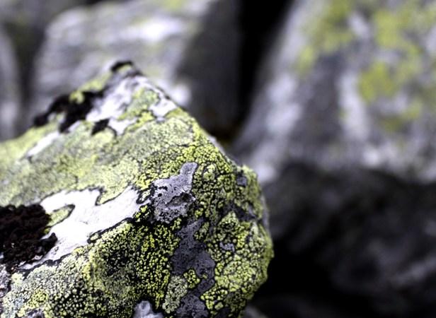 moss on granite