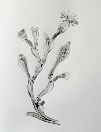 sea creature, pencil h2, hb, 2b
