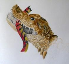 pencil 2h, 2b & coloured